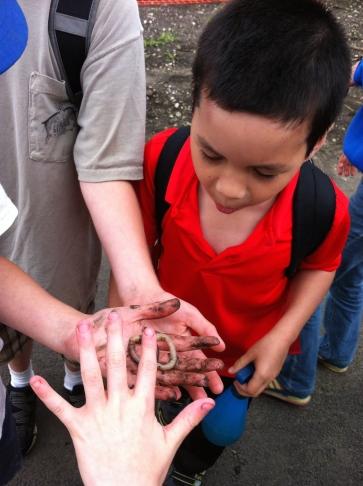 A very big earthworm!